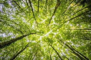 5 Ways You Can Save The Planet